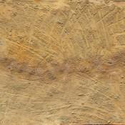Ten-fold Enlargement. 2006  acrylic on paper. 29.5 х 42